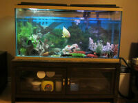 90 GALLON FISH TANK WITH ALL EQUIPMENT!