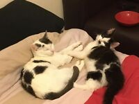Mother and son both friendly cats to a good home includes litter tray and cat food