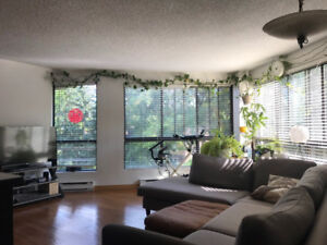 31/2 for rent at Nuns island (furnished, internet included)