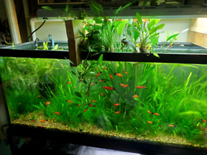 Aquatic Plants | Adopt or Rehome Pets in Ontario | Kijiji