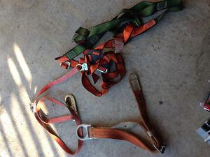 5 point harness and belt Kitchener / Waterloo Kitchener Area image 1