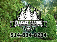 Tree Cutting - Hedge trimming - Stump Grinding - Prunning