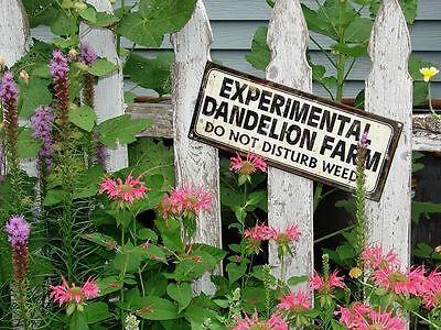 Kolibris freuen sich bestimmt auch über witzige Gartenschilder, oder?
