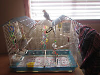 2 male cockatiels with cage