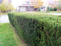 Professional Landscaping and Garden Maintenance
