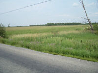 Prime Potential Development Land (126 acres) for $70,000? Here's