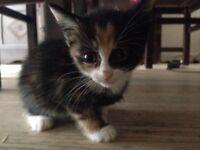 kittens for sale 40£