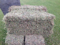 2nd Cut Grass and Alfalfa small square bales