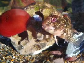 Tidal native marine rockpool aquarium