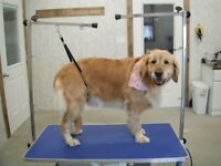 DOG GROOMING & BOARDING -- STRATHROY AREA