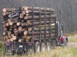 CHEAPEST HARDWOOD AROUND Kawartha Lakes Peterborough Area image 4