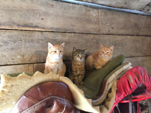 Three Older Kittens