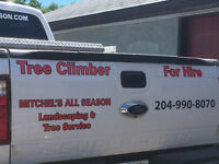 Tons of photos! Insured Tree service UP TO 50% OFF w/ no cleanup
