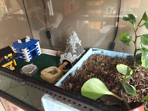2 leopard geckos with tank and accessories