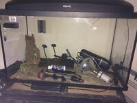 Fish or turtle/terrapin tank