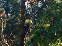 Tree Services and Consulting