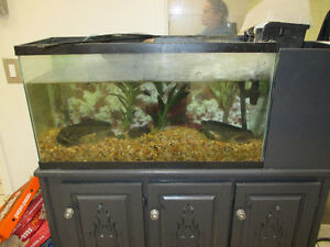 40 Gallon Aquarium with Stand, Filter, pump and heater $200 OBO