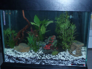 Aquarium For Sale 39 Gallon, canopy, grow lights, Gravel, Filter