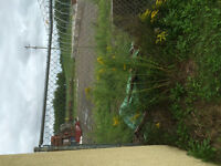 Fenced yard 125' x100' FOR RENT