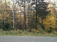 Beautiful wooded lot in Irishtown