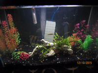 20 Gallon Tropical Fish Tank Complete Set Up