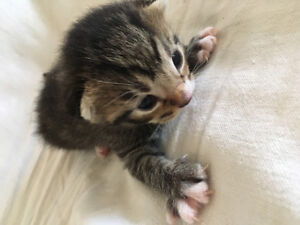 Cute kittens to loving home