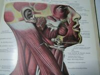 medical books 1930s amazing anatomy prints