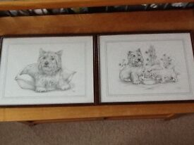 2 lovely framed Westie prints by C Varley