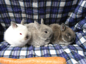 AMAZING BUNNIES FOR SALE !