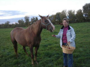 Wanted- Horse riding companion