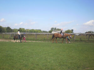 Horse riding for kids 4+yrs - Every weekend!! London Ontario image 2
