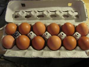 Farm Fresh Brown Eggs