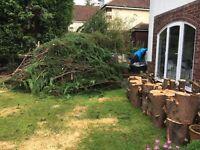 FREE TREE CUTTINGS FOR MULCH/BONFIRE
