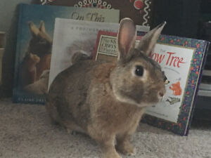Looking for loving home for pet rabbit