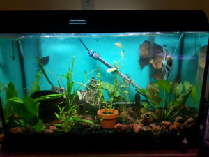 Aquarium/fish tank 50gallon
