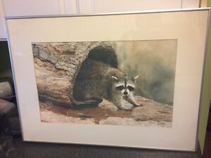 Framed raccoon print London Ontario image 1