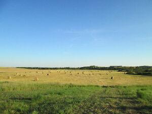 Oats-Alfalfa