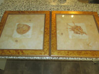 Sea shell pictures framed