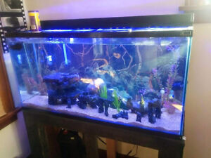 80 gal. HAGEN  aquarium w/ hood +LED