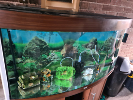 juwel vision 260 fish and stand