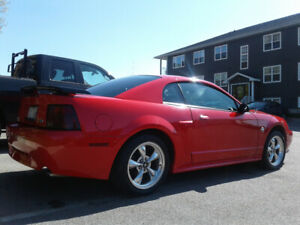Mustang for sale $10,000 Firm. 506-647-5007