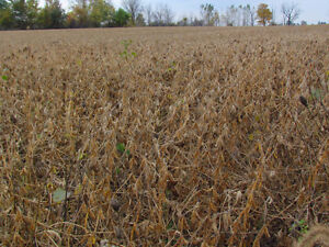 Farmland for sale - Invest in land, have a place to play