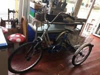 Tricycle with 2 trailers / bike