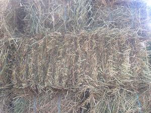 Small bale hay London Ontario image 1
