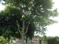 Tree services, garden maintenance , fencing and decking.