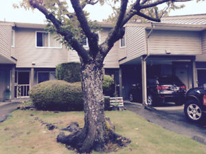 $2000 / 3br - 1560ft - 3 Bed / 2 .5 Bath Town House