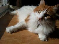 Missing cat from 492 hall road, hampton, STILL MISSING!!