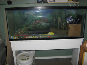 LARGE FISH TANK-COMPLETE