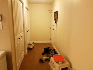 Looking for male roomate to share appartment