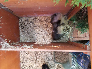 REDUCED Small animal cage and hutch